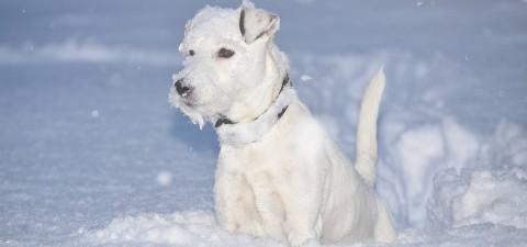 Hund im Schnee - wandern